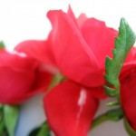 00124_roses