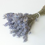 00287_lavender
