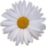 00265_daisy